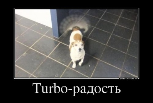 97776319_turbo-radost