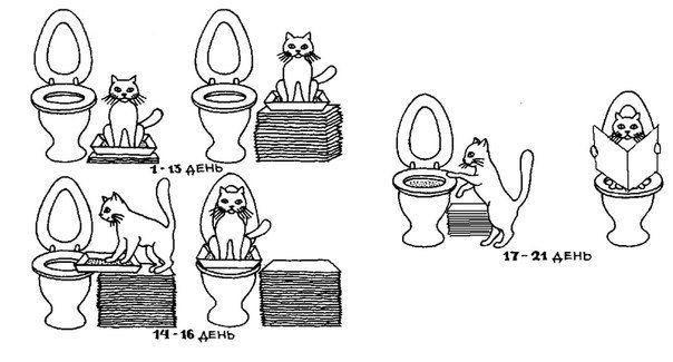 wc-kat