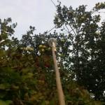 6 150x150 - Как достать фрукты с верхушки дерева?